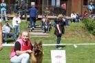 Oblastní výstava německých ovčáků Velká Bystřice 10.5.2014